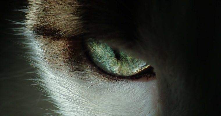 Hondsdagen: dreigend oog van hond
