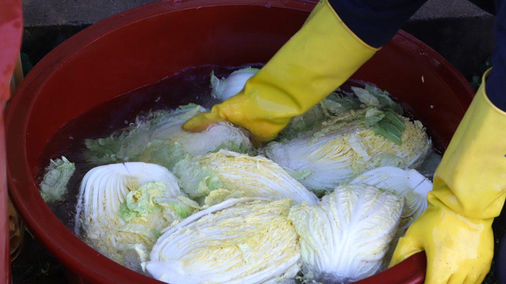 Zouten van de kool voor de kimchi door persoon met handschoenen aan in een gigantische rode teil. Zeker zes kolen!